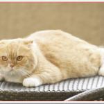 高台家の人々の猫ヨシマサは何歳?種類と本当の名前は?【可愛い画像あり】