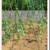 家庭菜園きゅうりの栽培方法!支柱の立て方や育て方