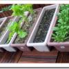 家庭菜園初心者が簡単にできるプランター栽培のコツ